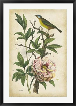Framed Antique Bird in Nature II Print