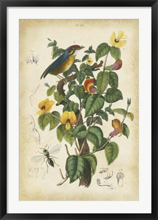 Framed Antique Bird in Nature III Print
