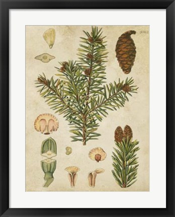 Framed Vintage Conifers III Print