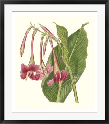 Framed Tropical Indian Reed Print
