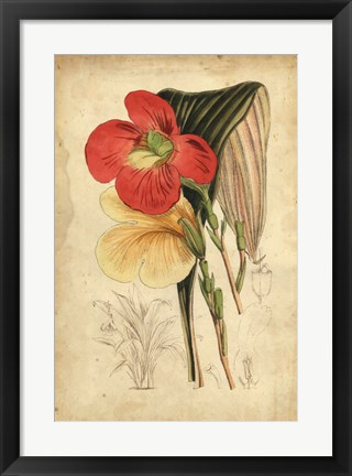 Framed Tropical Blooms I Print