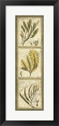 Framed Exotic Seaweed Panel II Print