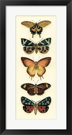 Framed Butterfly Collector V Print