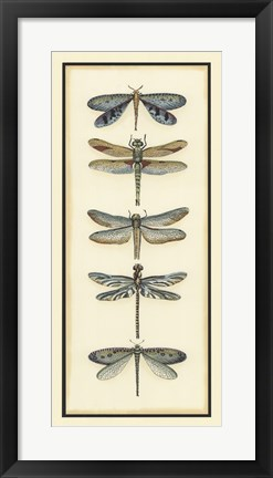 Framed Dragonfly Collector I Print