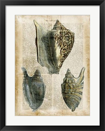 Framed Antiquarian Seashells I Print