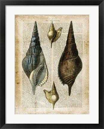Framed Antiquarian Seashells II Print