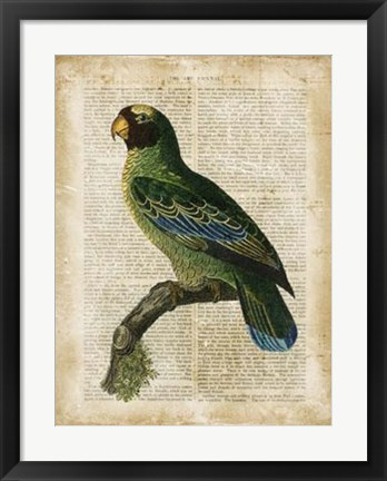 Framed Antiquarian Birds VI Print