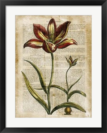 Framed Antiquarian Tulips I Print