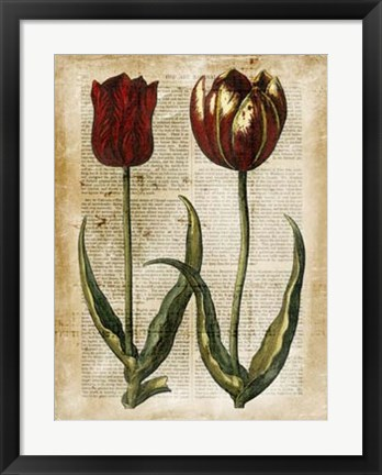 Framed Antiquarian Tulips IV Print