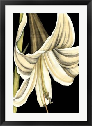 Framed Graphic Lily IV Print
