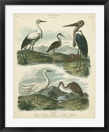 Framed Heron & Crane Species I Print