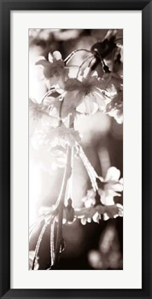 Framed Blossom Triptych III Print