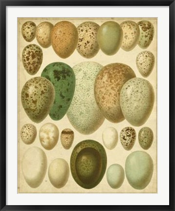 Framed Vintage Bird Eggs II Print