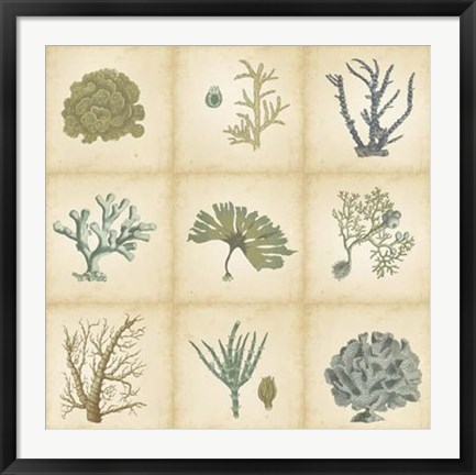 Framed Coral Curio Print