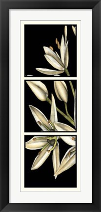 Framed Graphic Lily I Print