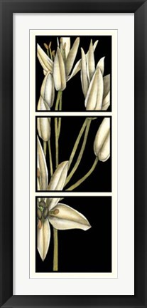 Framed Graphic Lily II Print