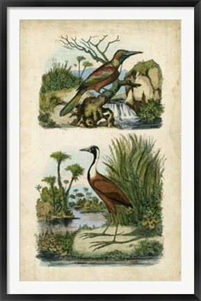 Framed Avian Sanctuary II Print