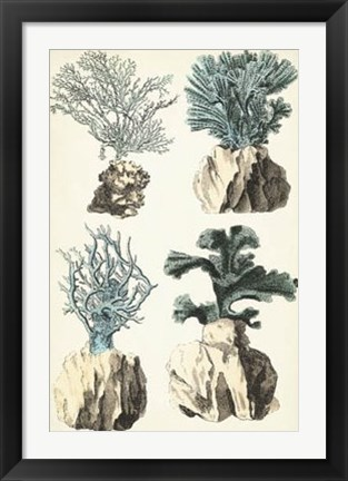 Framed Oversize Coral Species III Print