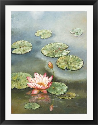 Framed Water Lily With Pink Blossom Print