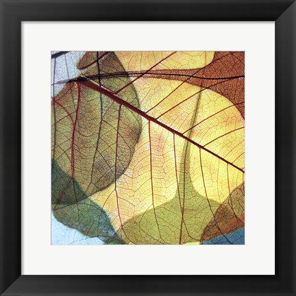 Framed Blue and Orange Leaves I Print