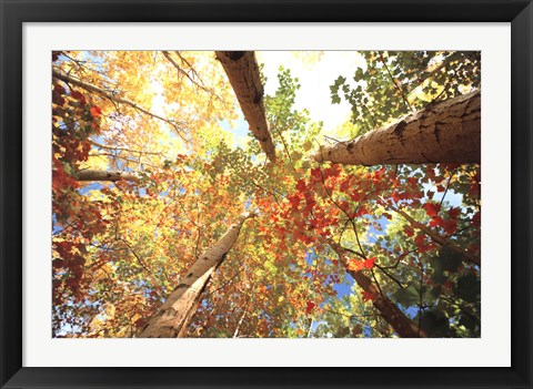 Framed Forest Canopy Print