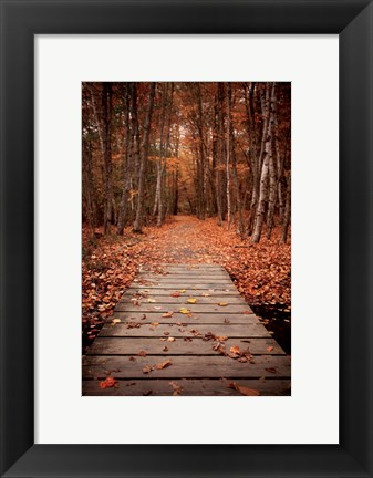 Framed Woodland Path Print
