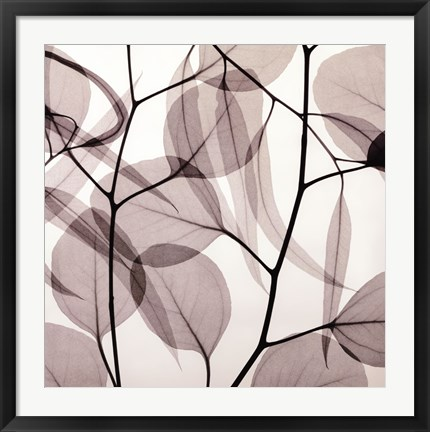 Framed Eucalyptus Leaves [Positive] Print