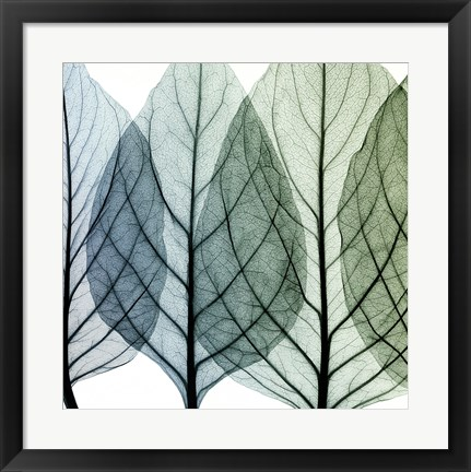 Framed Celosia Leaves I Print