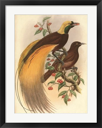 Framed Golden Bird of Paradise Print