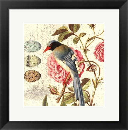 Framed Bird Study 1 Print