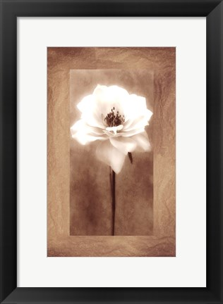 Framed Antique Rose Print
