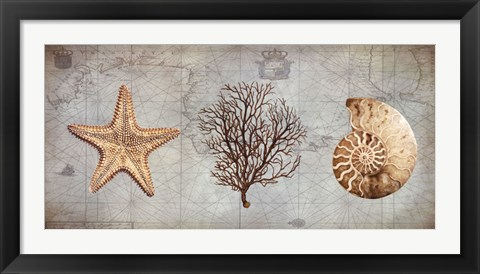 Framed Sea Treasures II Print