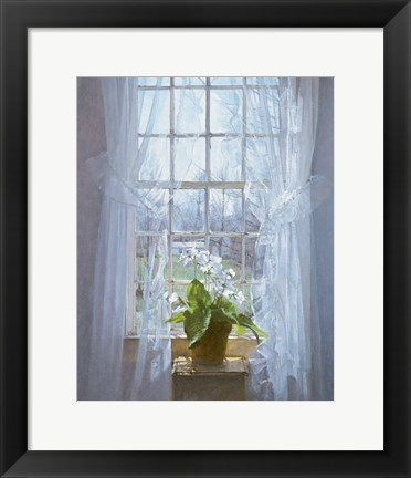 Framed Cape Primrose (small) Print