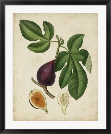 Framed Non-Embellished Antique Fig Tree Print