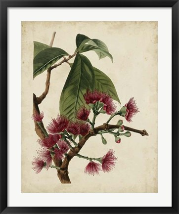 Framed Non-Embellished Antique Fringe Tree Print