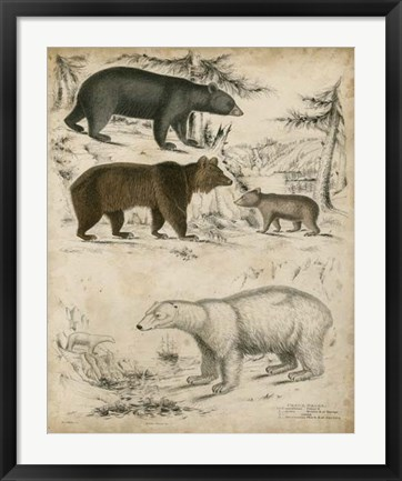 Framed Non-Embellished Species of Bear Print