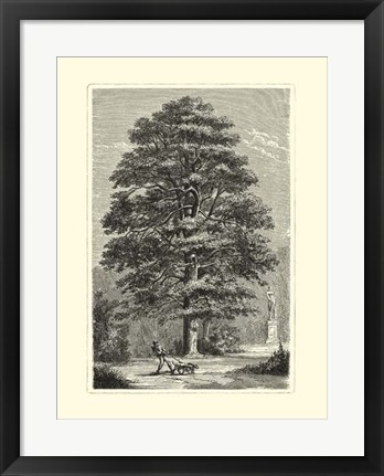 Framed B&W Terry's Trees I Print
