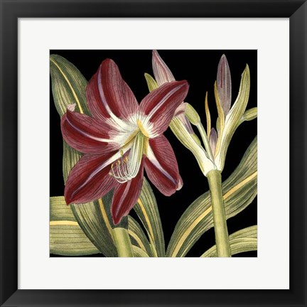 Framed Dramatic Blossoms II Print
