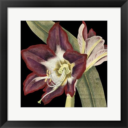 Framed Dramatic Blossoms III Print
