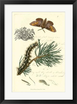 Framed Naturalist's Montage III Print