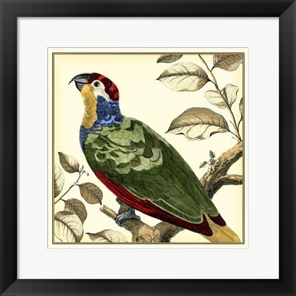 Framed Tropical Parrot II Print