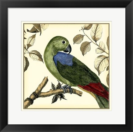 Framed Tropical Parrot III Print