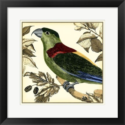 Framed Tropical Parrot IV Print
