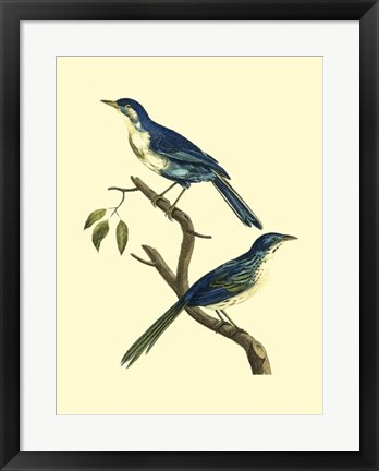 Framed Vintage Bird Pair II Print