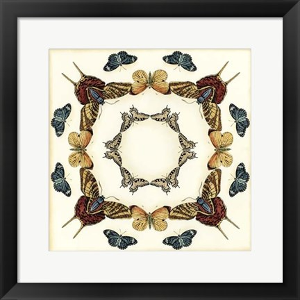 Framed Butterfly Collector I Print