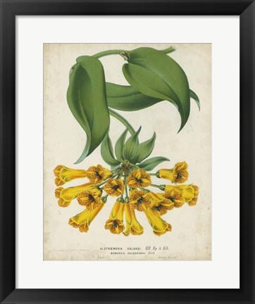 Framed Tropical Array II Print
