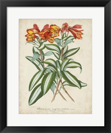 Framed Tropical Array III Print