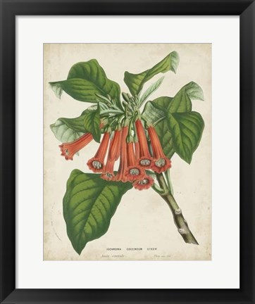 Framed Tropical Array VI Print