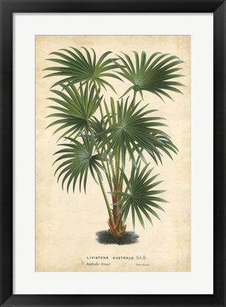 Framed Palm of the Tropics IV Print