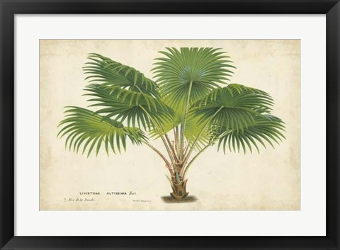 Framed Palm of the Tropics V Print